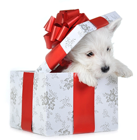 puppy-in-christmas-gift-box
